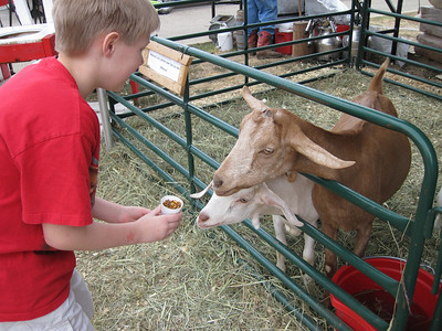 Feeding goats at Cow Town USA.