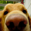 Nose Bailey Outside