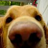 Nose Bailey Outside