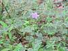 Spring2011 035