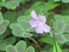 Spring2011 041