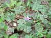 Spring2011 036
