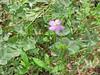 Spring2011 038