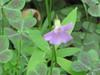 Spring2011 040