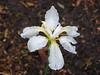 Spring2011 028