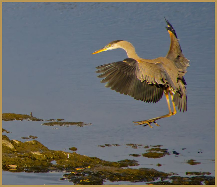 GBH Landing Photo 3, Cohoes flats