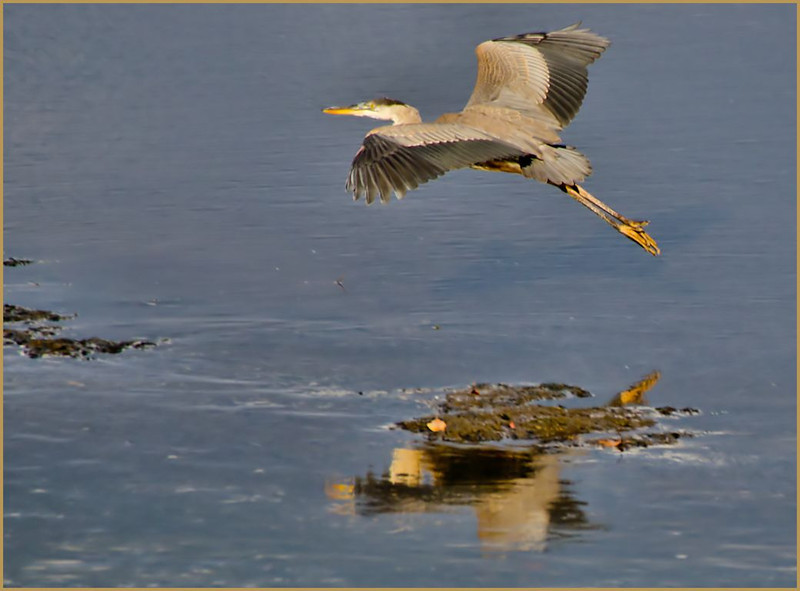 GBH Landing Photo1, Cohoes Flats