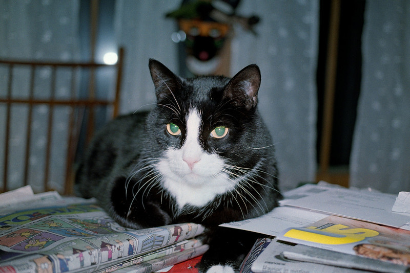 Obligatory cat photo (taken with Elan)