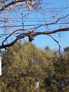 A squirrel attacks the rope holding the bird feeder.