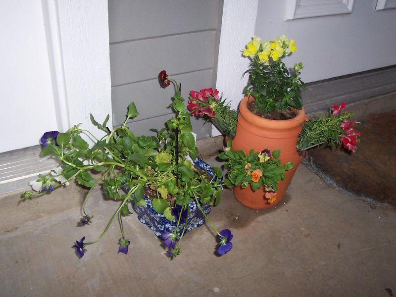 Front door flowers.