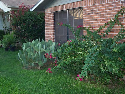Plants in the front yard.