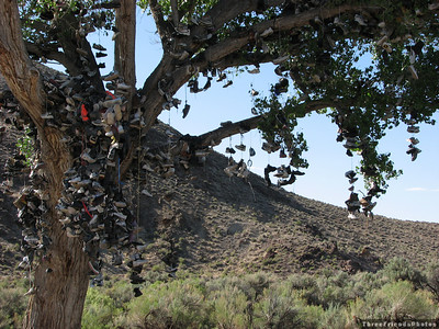 Highway 50 Shoe Tree