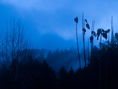 Second morning was much bluer for some reason.