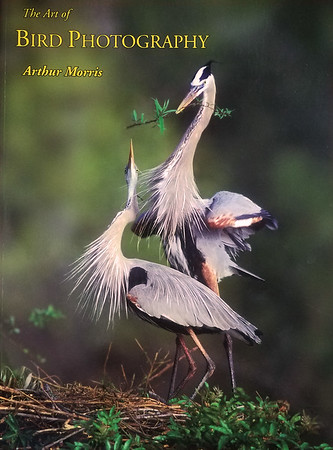 Bird Photography by Arthur Morris