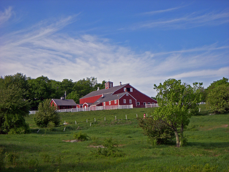 NH Cow Farm west of Lake Winnisquam