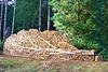 Firewood Tree