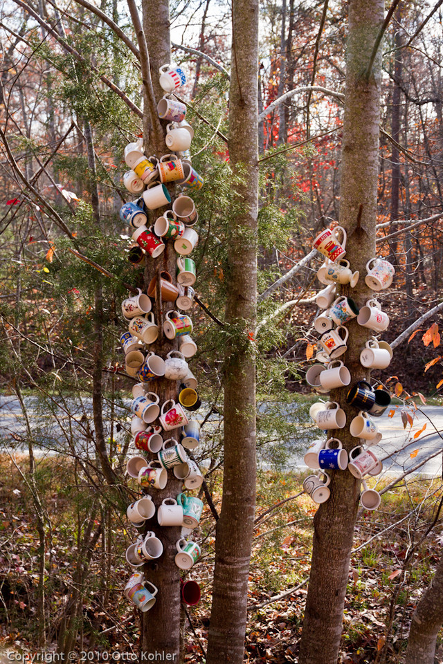 Coffee Cup Tree along Hwy 414, Greenville county, SC