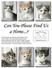 Kittens_for_adoption