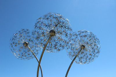 New Dandelion sculpture downtown Coeur d' Alene  July 2014