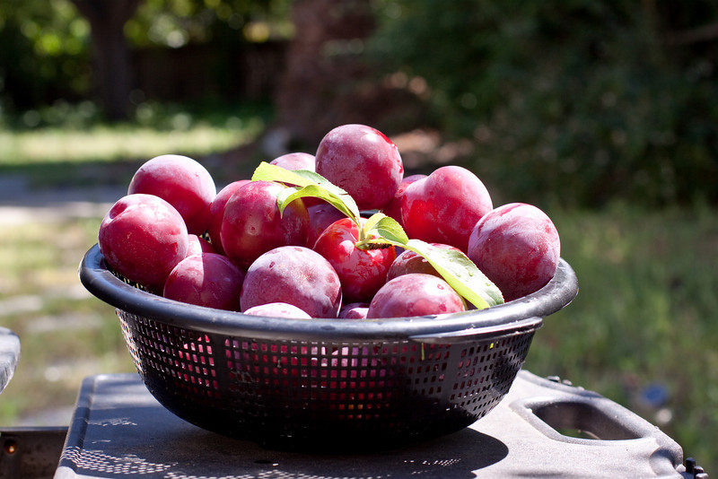 Plums! From our plum tree(s)!