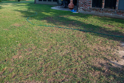 Grass is dying between the neighbor's yard and my back porch.  There is a big live oak tree that overhangs most of the section that's thin, but it seems to be much worse this year.