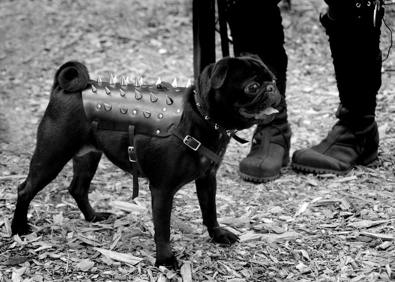 Killer guard dog