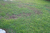 From the back porch looking towards the neighbor's house.  Healthy happy gras in front transitioning into unhappy grass.