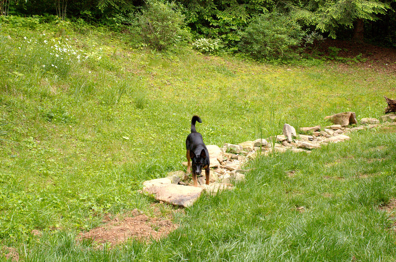 Chica playing in the dry creek bed made of stones and river rock.  During a storm, the creek fills up with runoff.