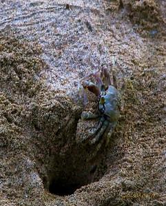 crab042611
