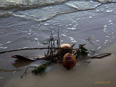 Coconuts012311
