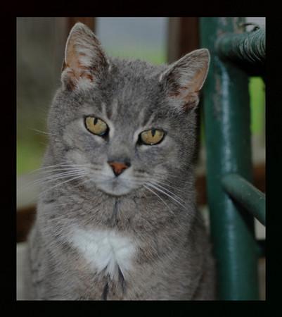 Hi, My Name Is Koors Kitty