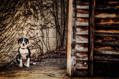 Dog sitting along South Mulberry Street in Mount Vernon, Ohio. Photographed on January 12, 2013.
