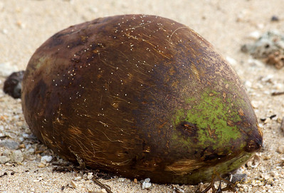 Coconut123110