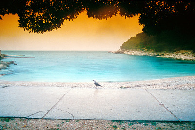Bird by the Seaside - Mouette sur la promenade