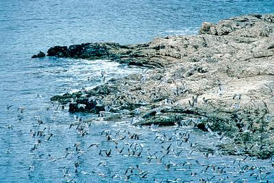 Bird Flock - Nuée d'oiseaux