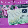 5 March 2010<br /> Orchid Show - US Botanic Garden, Washington, DC