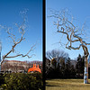 5 March 2010<br /> National Gallery of Art Sculpture Garden - Washington, DC<br /> Graft 2008-2009 (stainless steel and concrete) - Roxy Paine (American born, 1966)