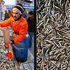 Ankara - January 2010<br /> Balik Pazari (Fish Market)