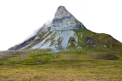 Arctic Expedition Cruising - Tromso to Svalbard - Silver Explorer (Silver Expeditions) Isfjorden - Alkhornet 12 July 2011