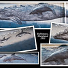 Wyland Whaling Wall - Baltimore, Maryland<br /> 17 December 2011