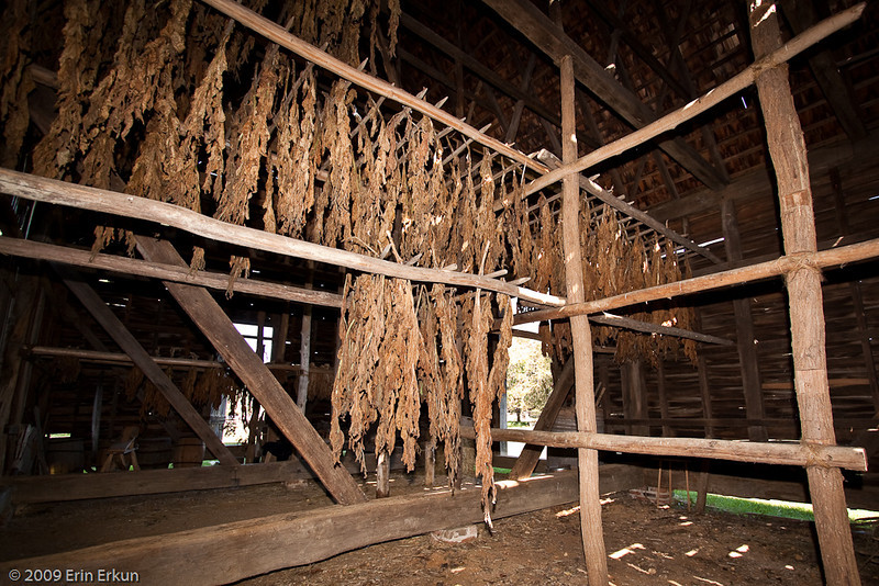 A glimpse inside the tobacco house.