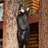 Black bear cub at Alpine Village!