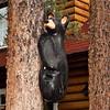 Black bear cub at Alpine Village!