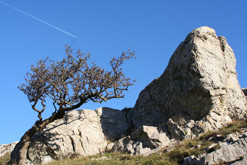 Rock, tree, plane