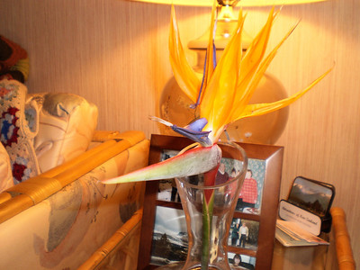 Bird of paradise blooming in the middle of winter