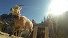 i_Sheep_CFW_gopro2_still (1)