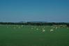 A Field in Texas