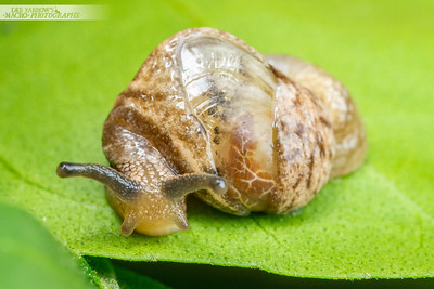 Snail in a Half Shell