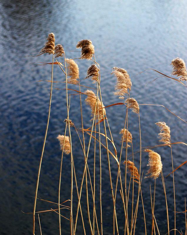 lois-web-reeds-IMG_2334