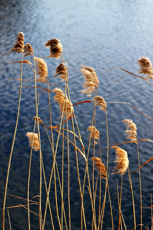 Lois reeds IMG_2334 sharpened